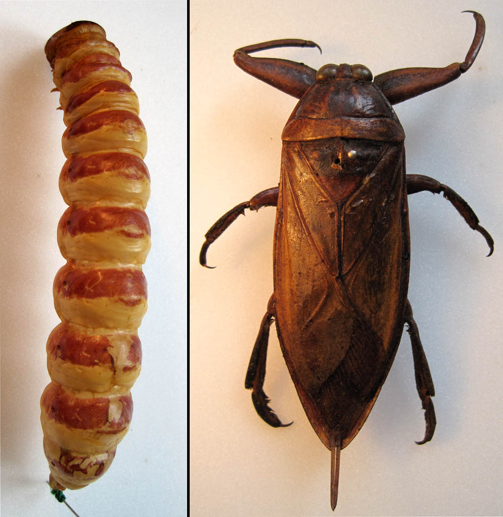 Insects_as_Food