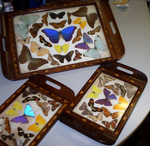 Unusual Trays acquired in July 2011.