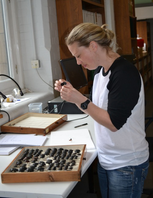 Roisin looking at some dung beeles from the collection of Manchester Museum