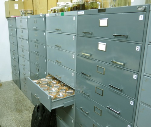 Cabinets with the spider collections, INBio, San Jose, Costa Rica