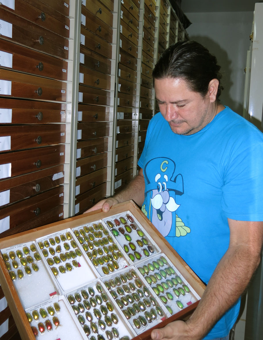 A drawer of fruit beetles from Costa Rica, INBio, San Jose, Costa Rica