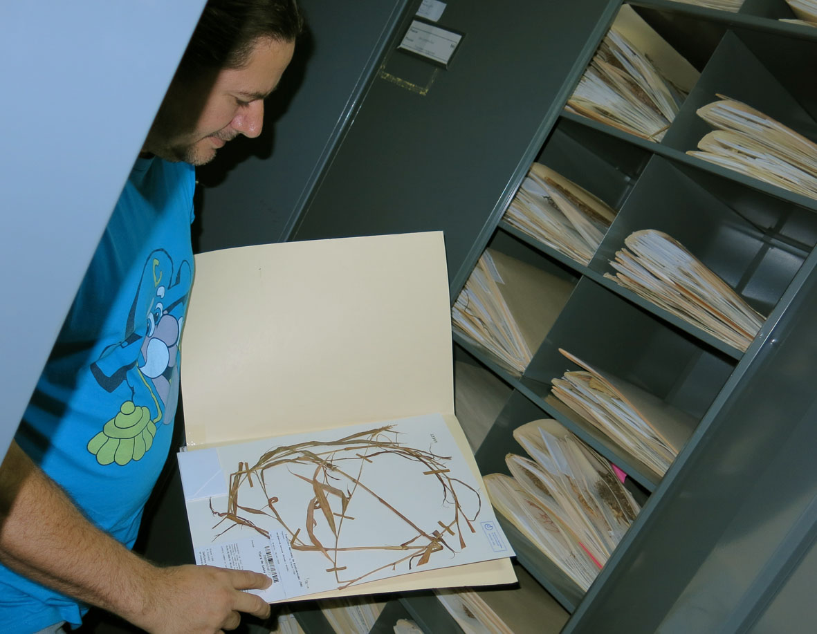 The large herbarium of INBio, San Jose, Costa Rica