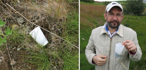 The plastic cup that became a deadly trap to a number of minibeasts near Lake Urridavatn in Iceland. See also a short video below.